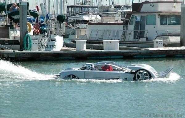 Sea Lion - 4